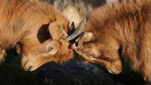Streit in der Partnerschaft kann auch zu Erektionsstörungen führen